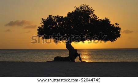 Divi Divi Sunset - stock photo