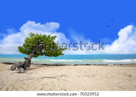 Divi tree - stock photo