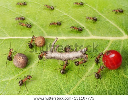 dividing line and cargo traffic at ants work path in anthill, teamwork - stock photo
