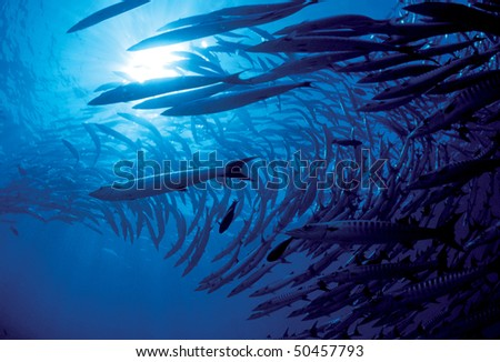 Diving at Barracuda Point, SIPADAN - malaysia - stock photo