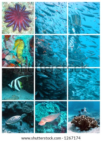 diving - collage of underwater images - stock photo