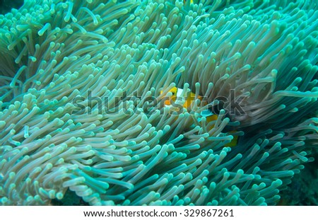 Diving in Bali, Indonesia - stock photo