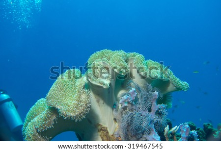 Diving in Komodo National Park, Indonesia - stock photo