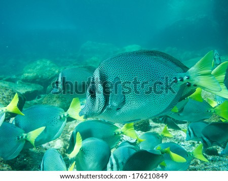 Diving in the sea of cortez, mexico - stock photo
