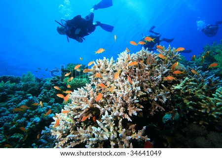 Diving on beautiful coral reefs