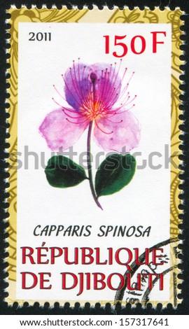 DJIBOUTI - CIRCA 2011: stamp printed by Djibouti, shows Caper, circa 2011 - stock photo
