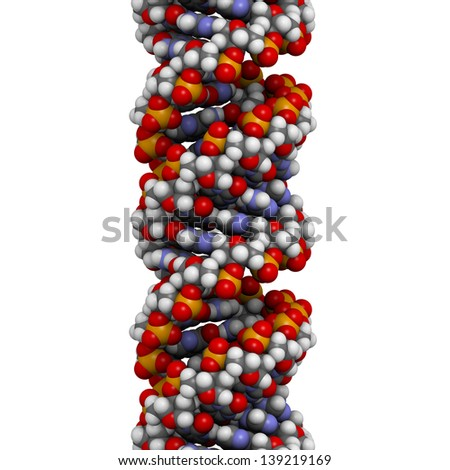 DNA (A-DNA conformation) structure. DNA is the main carrier of genetic information in all organisms. The DNA shown here is in the rare and possibly non-native A conformation. - stock photo