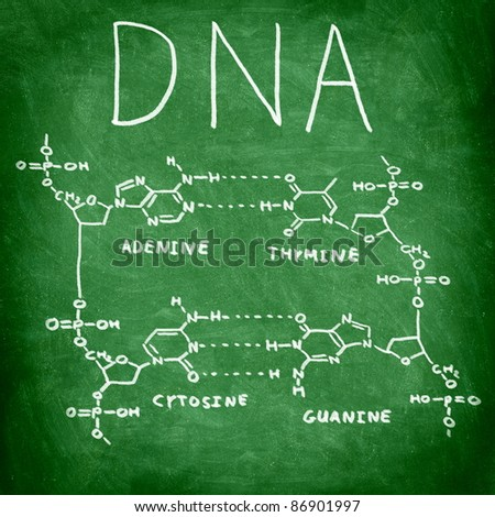 DNA chemical structure on chalkboard showing the four bases of DNA - stock photo