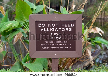 Do Not Feed Alligators sign in Florida Big Cypress Swamp. - stock photo