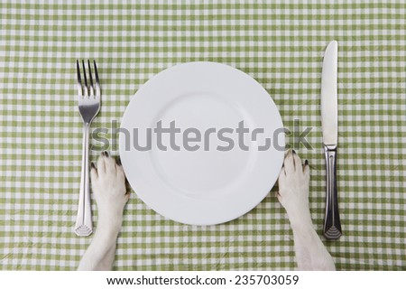 Do paws near Empty white plate. strict diet. top view  - stock photo