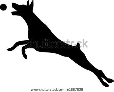 Doberman Jumping for Ball