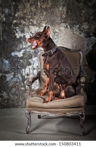 Doberman, vintage, grunge, wall guard - stock photo