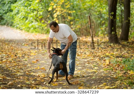 Dobermann is holding the stick in a forest near the man. - stock photo