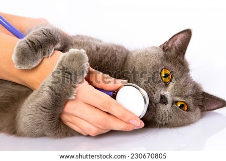 Doctor examines a cat on a white table against a white background