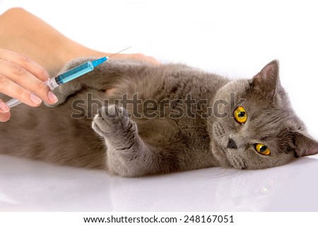 Doctor examines a cat on a white table against a white background - stock photo