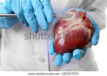 Doctor holding heart organ and scalpel close up - stock photo