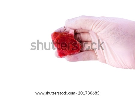 Doctor or Nurse Hand with Medical Gloves Holding Gauze with Blood for concept and idea of Surgery First-Aid care for patients, Medical Tool and Surgery Instrument, Isolated on white. - stock photo