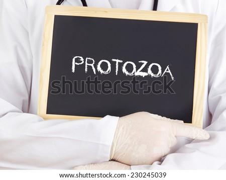 Doctor shows information: protozoa - stock photo