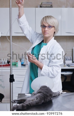 doctor vet woman work at surgery room on ill animal cat and dog giving help and medical care