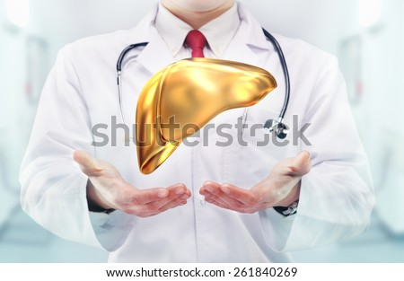 Doctor with stethoscope and golden  liver on the  hands in a hospital. High resolution.  - stock photo