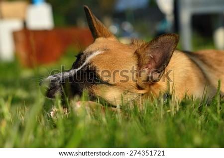 dog - stock photo