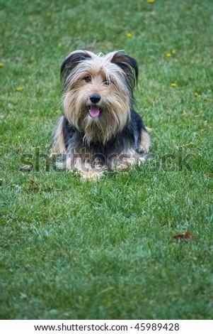 dog 1 - stock photo