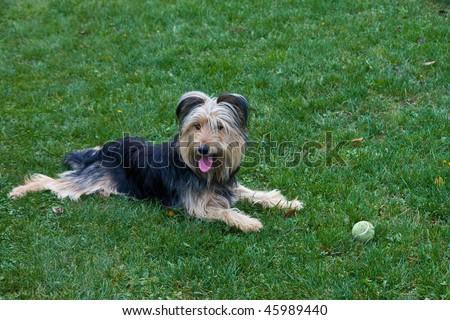 dog 5 - stock photo