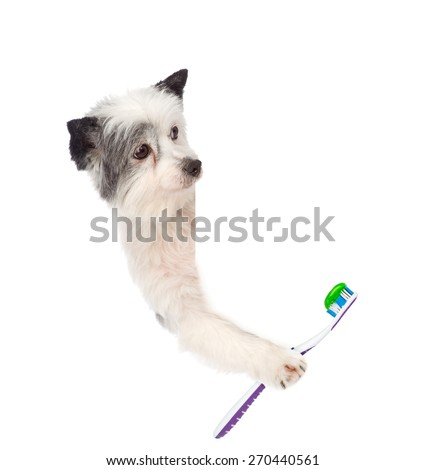 dog above white placard with toothbrush,. isolated on white background - stock photo