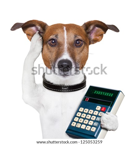 dog accountant thinking and calculating with calculator - stock photo
