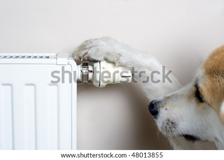 Dog adjusting heater thermostat, household concept. The dog is Japanese Akita Inu. - stock photo