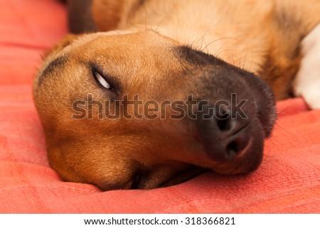 Dog/alien - enhanced colors - stock photo