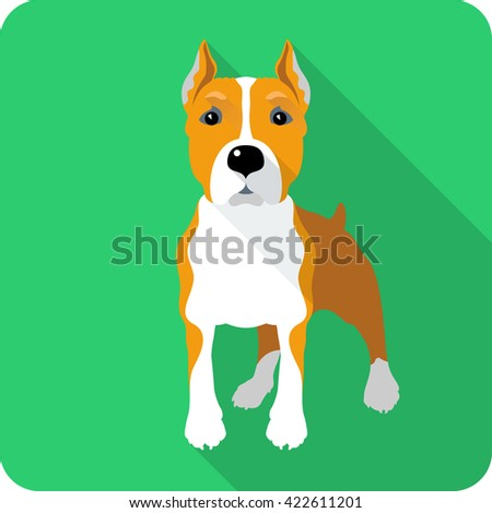 dog American Staffordshire Terrier standing icon flat design