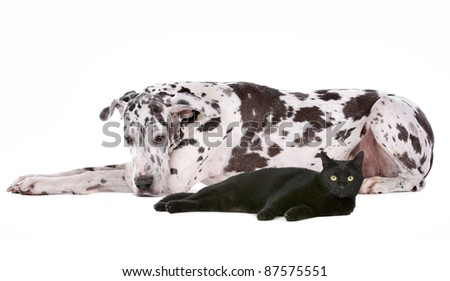 dog and a cat in front of a white background - stock photo