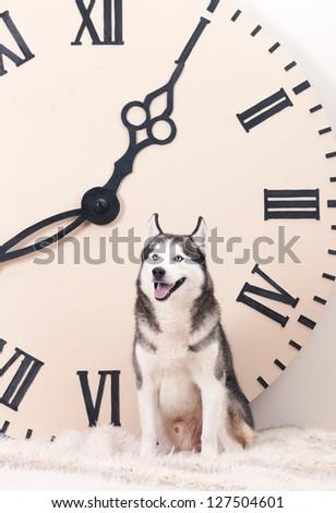 dog and big clock - stock photo