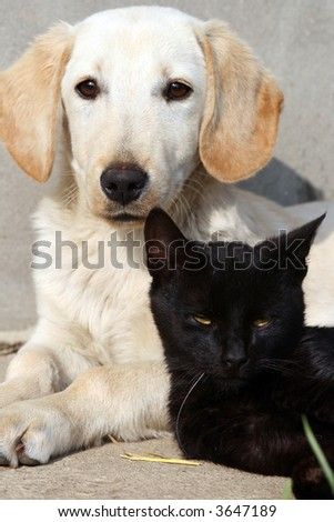 Dog and black cat relaxing