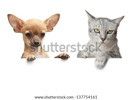 Dog and Cat above white banner on white - stock photo