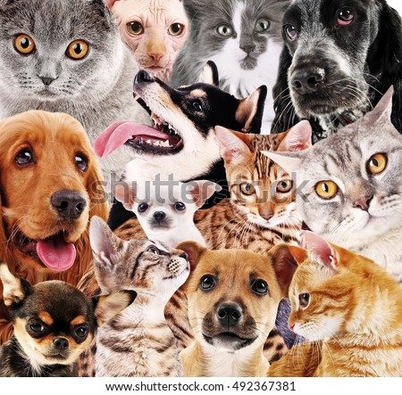 Dog and cat background