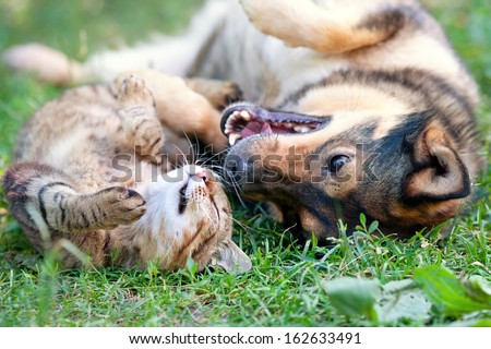 Dog and cat best friends playing together outdoor. Lying on the back together. - stock photo
