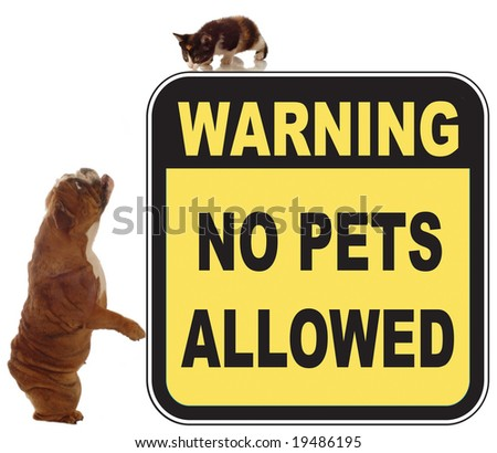 dog and cat chase in a no pets allowed sign - stock photo