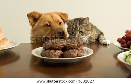 Dog and cat going for a feast - stock photo