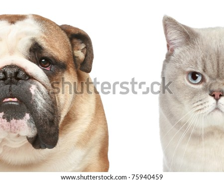 Dog and cat. Half of muzzle close-up portrait on a white background - stock photo