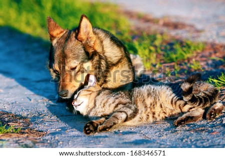 Dog and cat have a rest together outdoor - stock photo