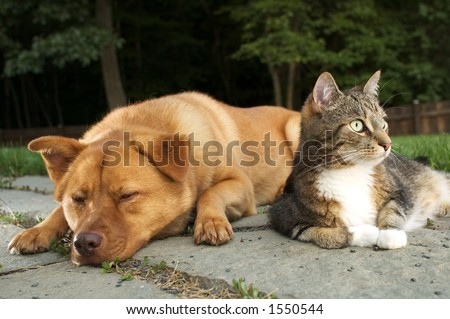 Dog and Cat (Hey wake up, we have company)