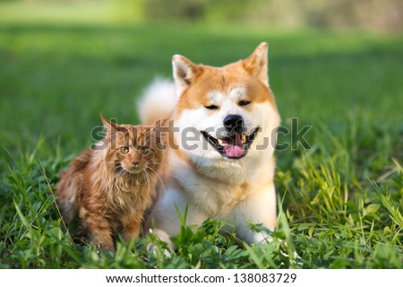 Dog and cat in a grass. Russia - stock photo