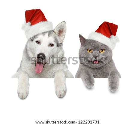 Dog and cat in Santa red hats looking at you on a white banner - stock photo
