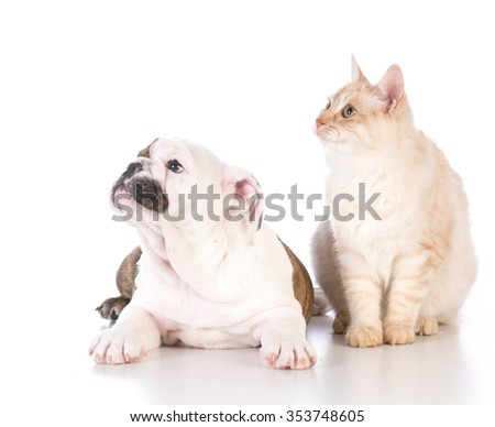 dog and cat isolated on white background - stock photo