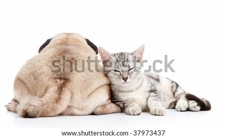 dog and cat isolated on white background - stock photo