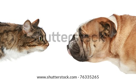 Dog and Cat looking at each other. Side view - stock photo