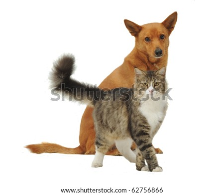 Dog and cat looking at the camera, isolated - stock photo