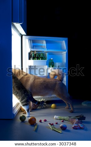 Dog and cat looking for meat in the refrigerator - stock photo